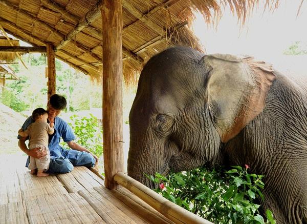 とある父子と象さんのimage