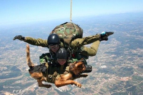 とある非日常な情景(兵士と軍用犬)image