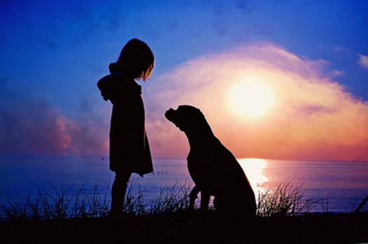 犬と少女と夕陽image