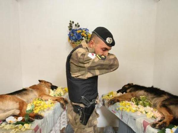 犬さんたちの弔いと涙image