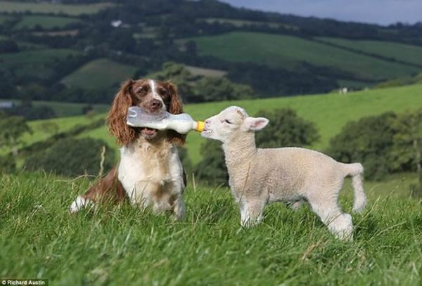 犬と子羊image