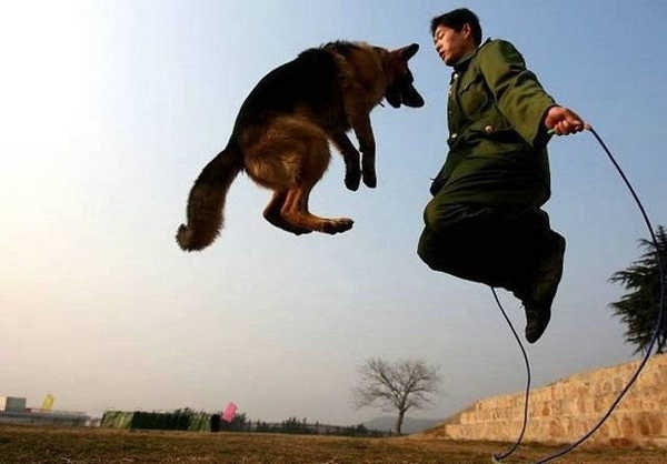 犬と遊ぶimage
