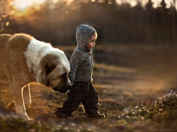 犬と幼い少年のいる情景image