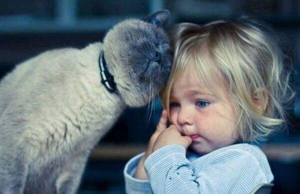 猫さんと幼女image