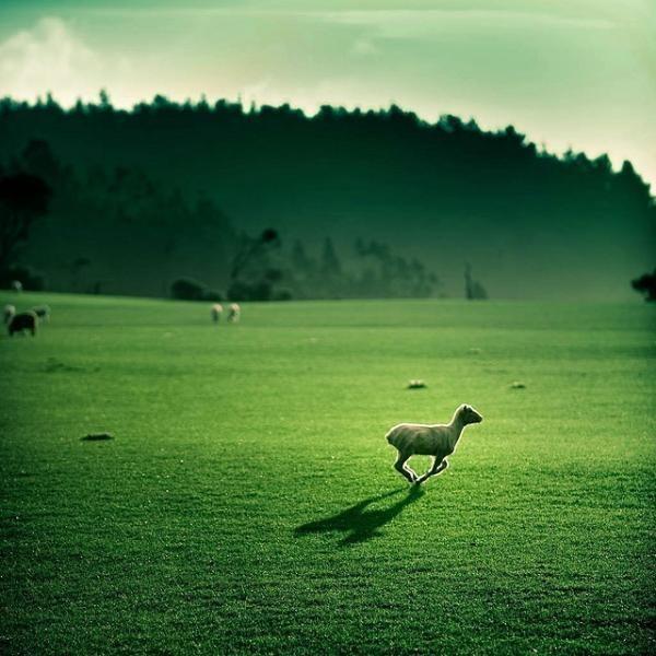 草原の緑とヒツジimage