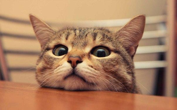 とある猫さんの近影image