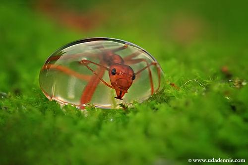 緑の上の水玉とアリさんimage
