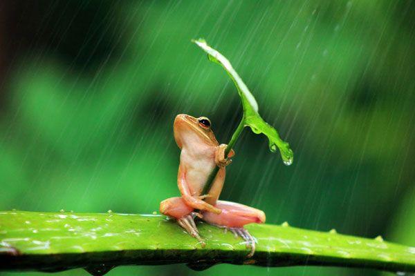 カエルと葉っぱ傘image