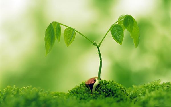 緑の芽生えimage