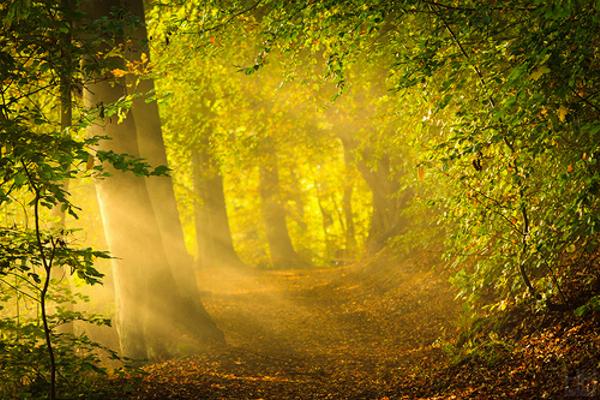 黄色の木洩れ日image