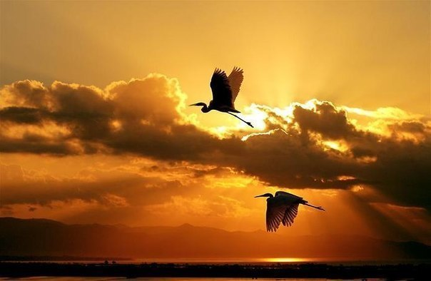 夕陽に飛ぶつがいimage