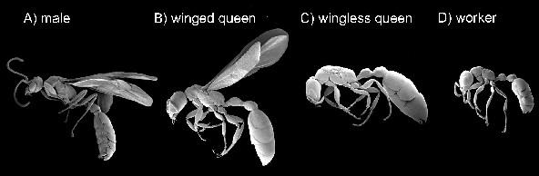 アリさん(女王と働き蟻)image