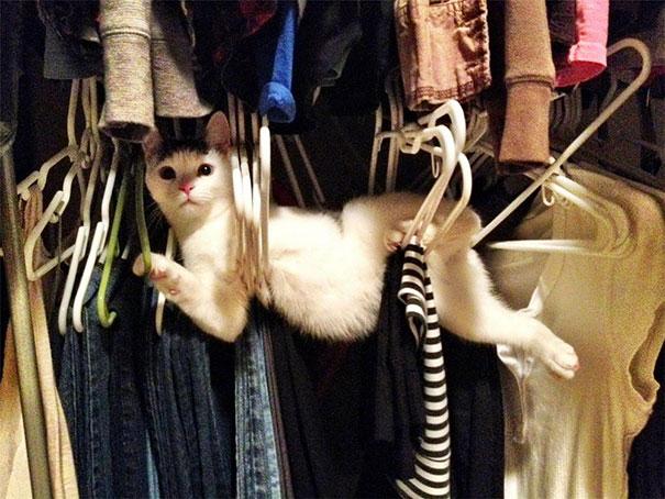 ネコさんの好きな場所image