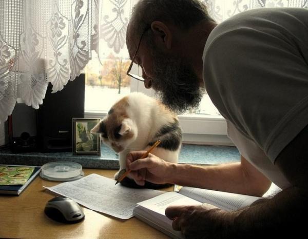 ネコさんお勉強するimage