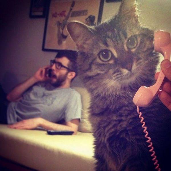 ネコさんと電話image
