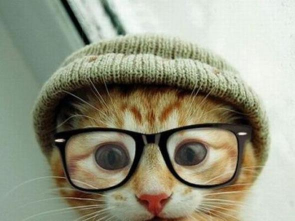 メガネねこさんimage