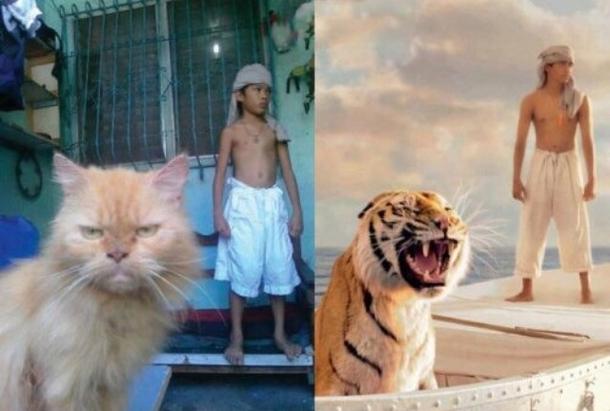 ネコさん(現実との相違な)image