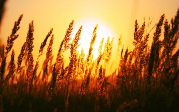 雑草と夕陽image