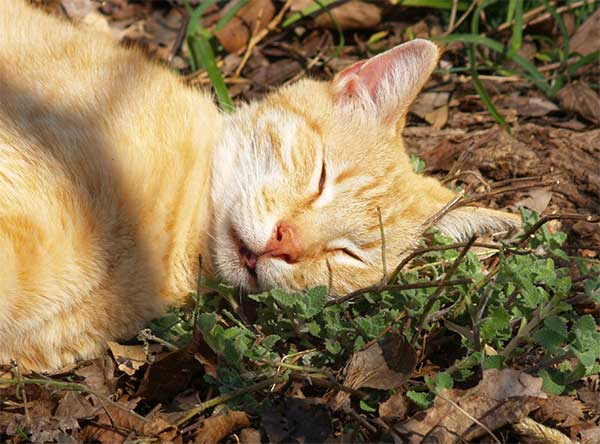 雑草とネコさん2image
