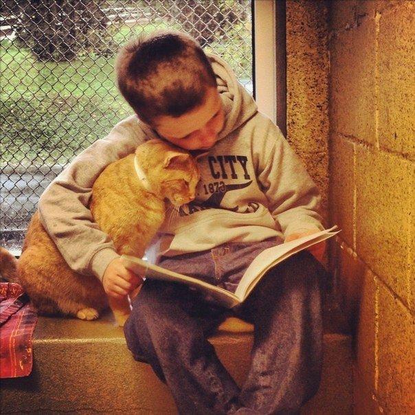 人として(ネコと本と少年)image