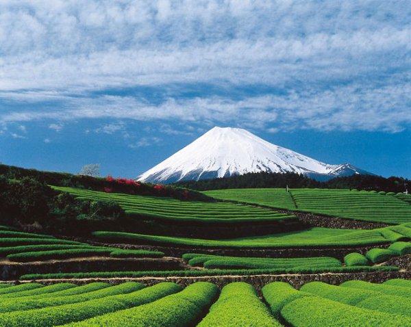 富士山(茶畑と)image