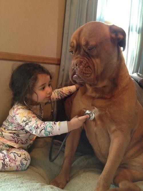 とある子供のお医者さんとわんこimage