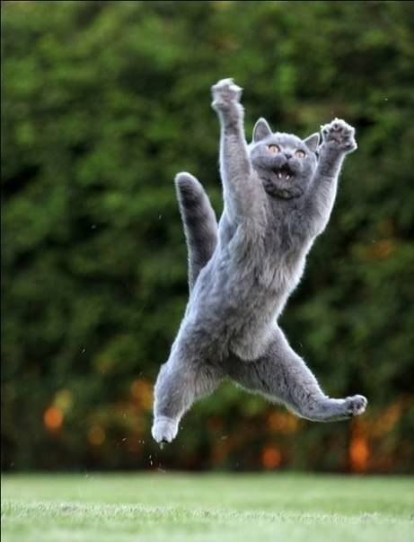 ネコさん(跳ぶ)image