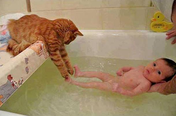 ネコさんちょっかい出すimage