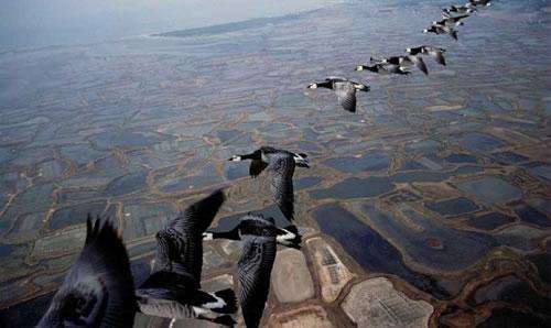 自然と生き物(geeseさんの編隊飛行)image