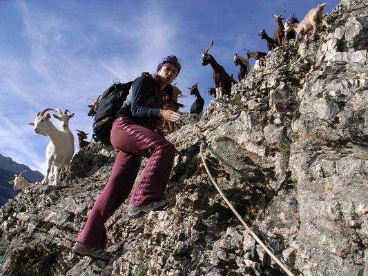 自然と生き物(Goatsさんたち)image