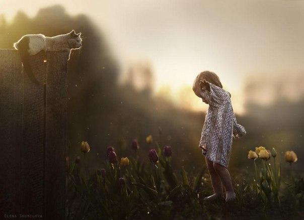 自然と生き物(ネコと優しい時間)image
