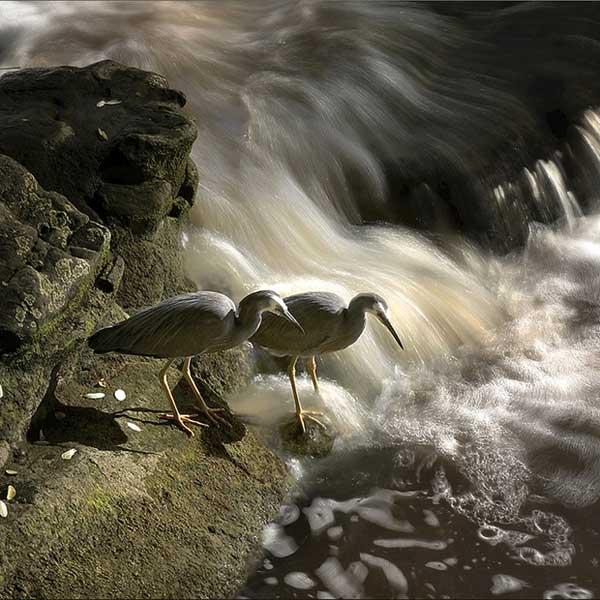 自然と生き物(急流の傍で)image