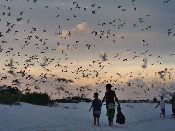 自然と生き物(鳥さんの群れのいる風景)image