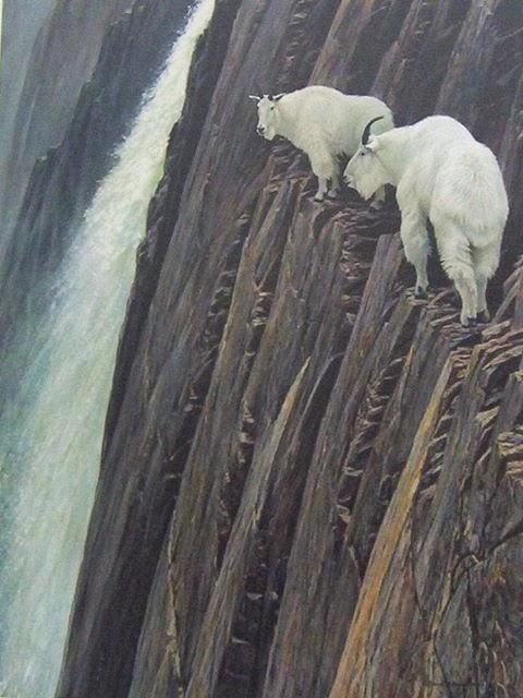 自然と生き物(滝の傍のマウンテンゴートさん)image