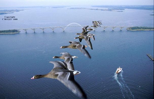 自然と生き物(鳥さんの編隊飛行)image
