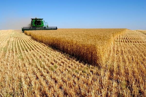 赤いマフィアとか(ウクライナの穀倉地帯)image