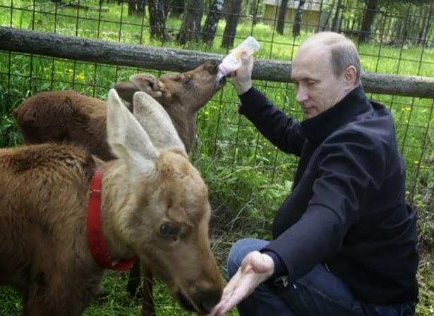 赤いマフィアとか(プーチンさんのミルクやり)image