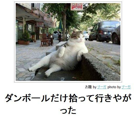 ほのぼの(ネコのひとこと)image