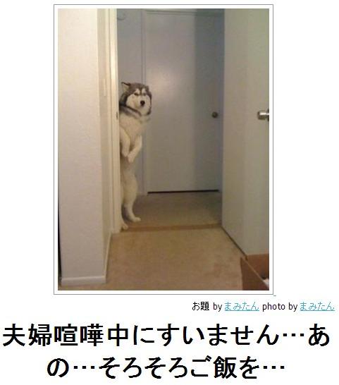 ほのぼの(そろそろご飯を)image