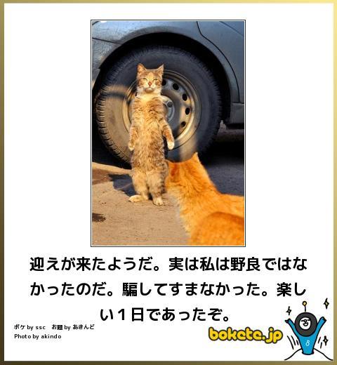 ほのぼの(実は)image
