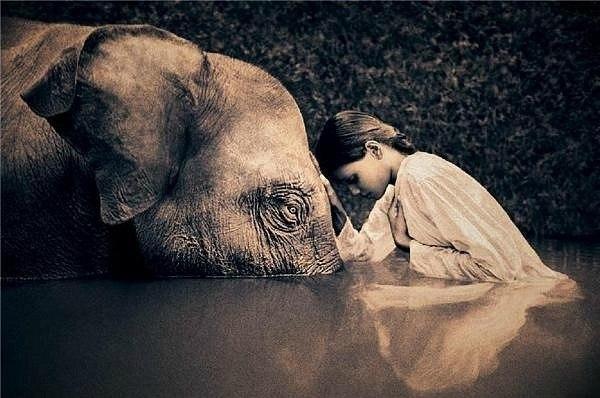 ほのぼの(象さんと少女)image