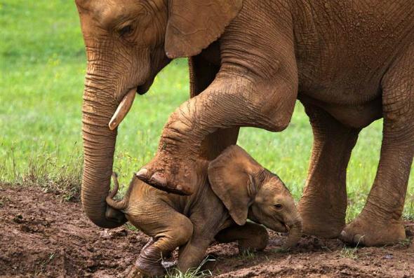ほのぼの(象さんの子育て)image