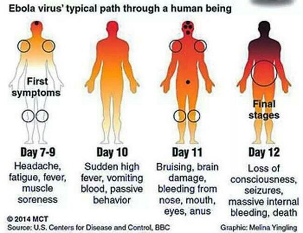 エボラの現実(感染の道筋)image