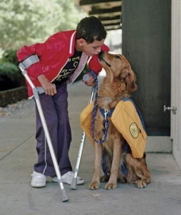 動物さん(少年と介護犬)image