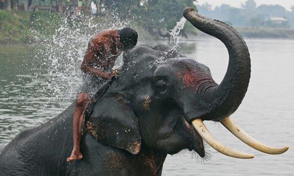 動物さん(象の水やり)image