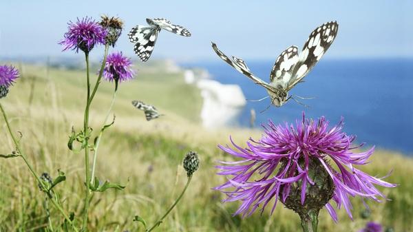 地球の情景(蝶の飛翔)image