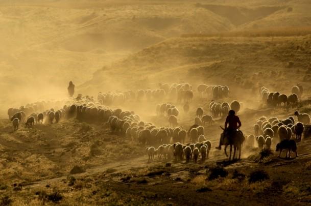 修飾用画像(羊飼いと羊)image