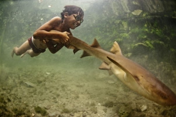 知らないところ(少年とサメ)image