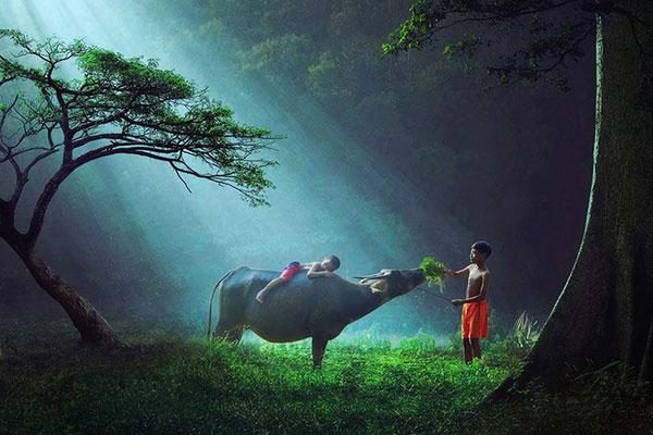 風景(森のなかの少年と水牛)image