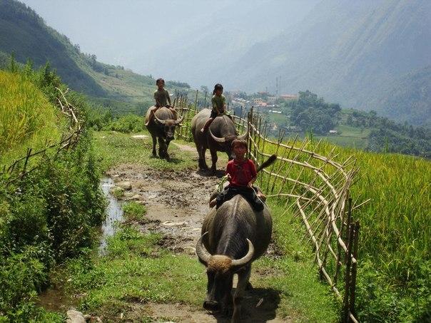 マインド(水牛に乗る子供)image